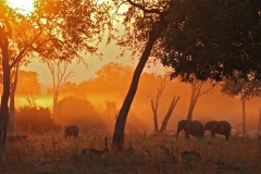 Sunset at the Lion Camp, Luangwa Valley