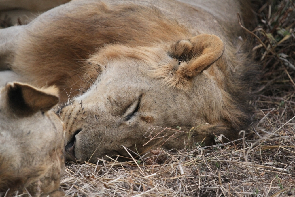 Let Sleeping Lions Lie