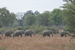 Another Herd of Elephants