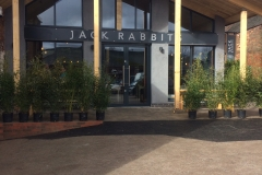 Jack Rabbit's external view