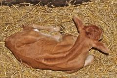 Prunella, newborn 27:5:14IMG_7259
