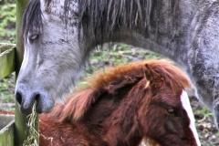 Rosemary's horses