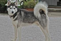 A beautiful dog called Skye