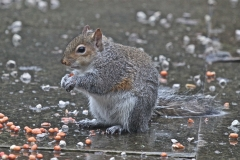 A soggy but happy squirrel