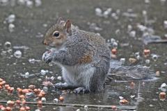 A soggy but happy squirrel