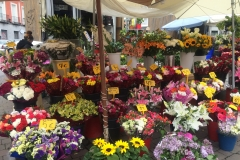 A colourful flower display