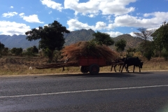 Rather overloaded oxcart Malawi