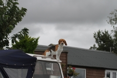A nautical Beagle