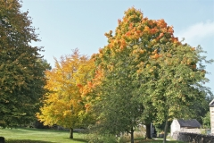 More Autumn Colour - the trees on Parwich Green