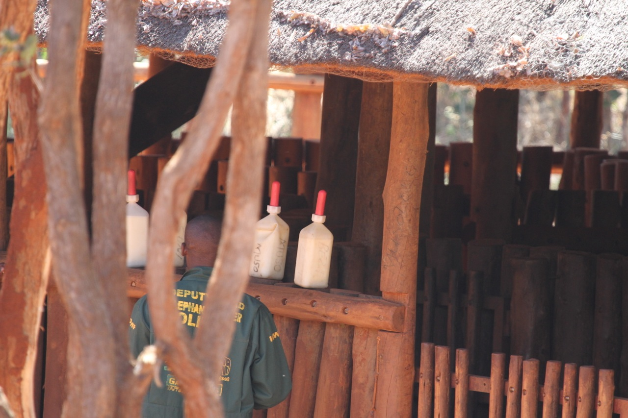 Bottles of milk for the baby elephants